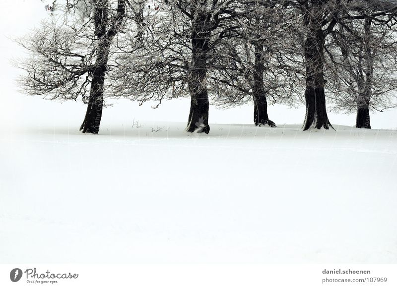 Weihnachtskarte 5, die die Nr 6 ist Himmel Natur blau weiß Baum Ferien & Urlaub & Reisen Winter Einsamkeit kalt Schnee Horizont Deutschland Hintergrundbild