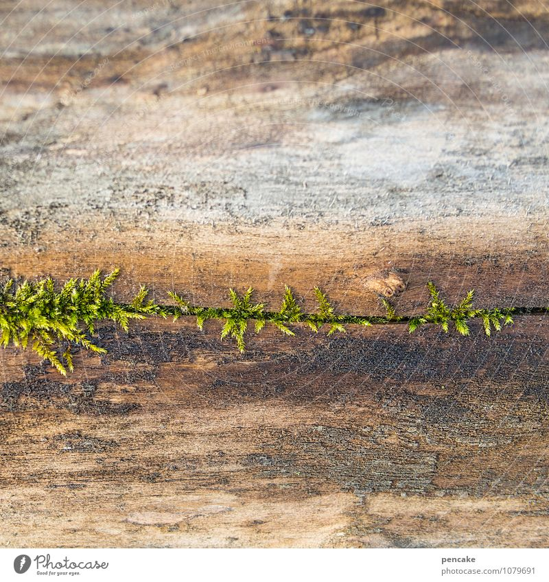 entwarnung Natur Pflanze Wasser Bewegung Frühling Holz Wachstum Beginn einzigartig Zeichen Urelemente Hoffnung geheimnisvoll Moos anstrengen atmen