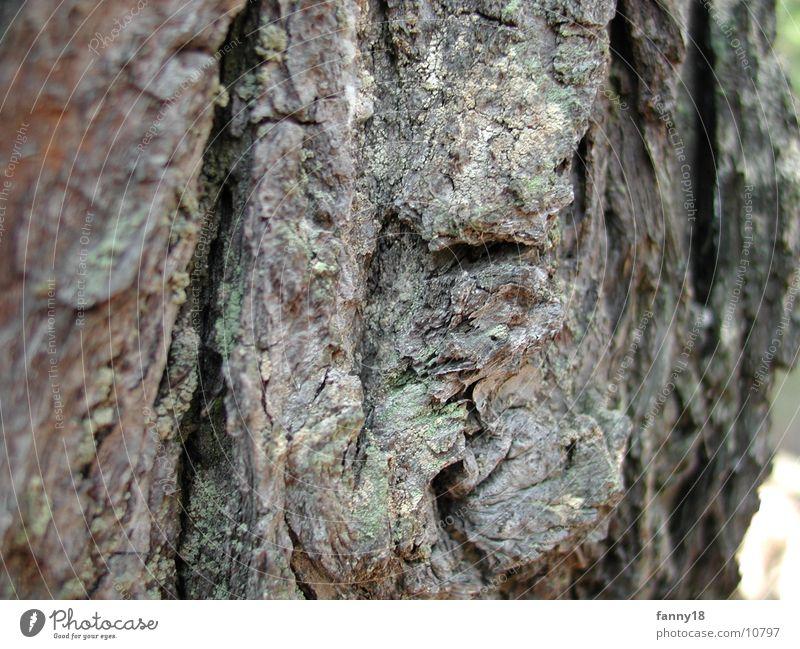 Die Baumrinde 2 Natur Makroaufnahme