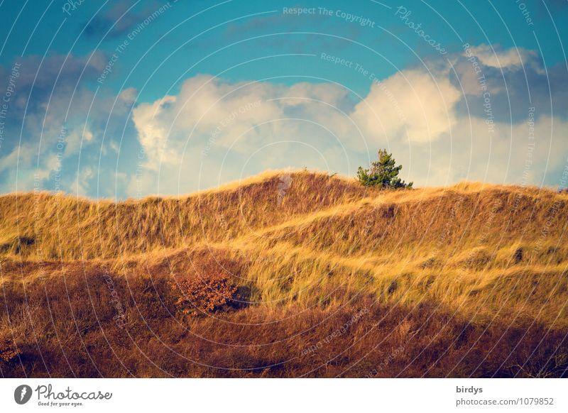 Kiefer im Dünenland Himmel Natur blau Farbe rot Landschaft Wolken gelb natürlich Idylle hoch Hügel Stranddüne exotisch geschwungen