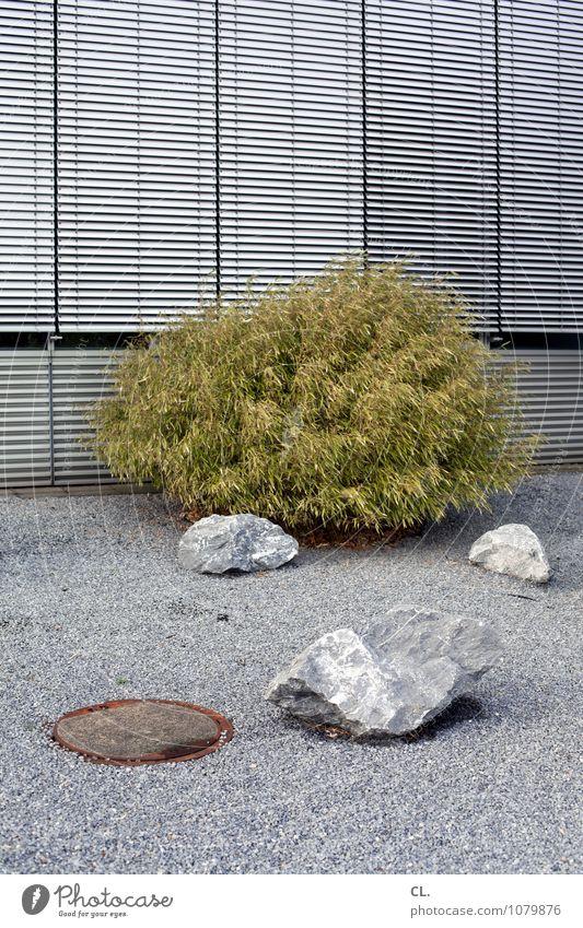 steinzeit Umwelt Sträucher Mauer Wand Fenster Rollo Gully Kies Kieselsteine Stein hässlich trist grau grün Langeweile stagnierend steinig Steinboden