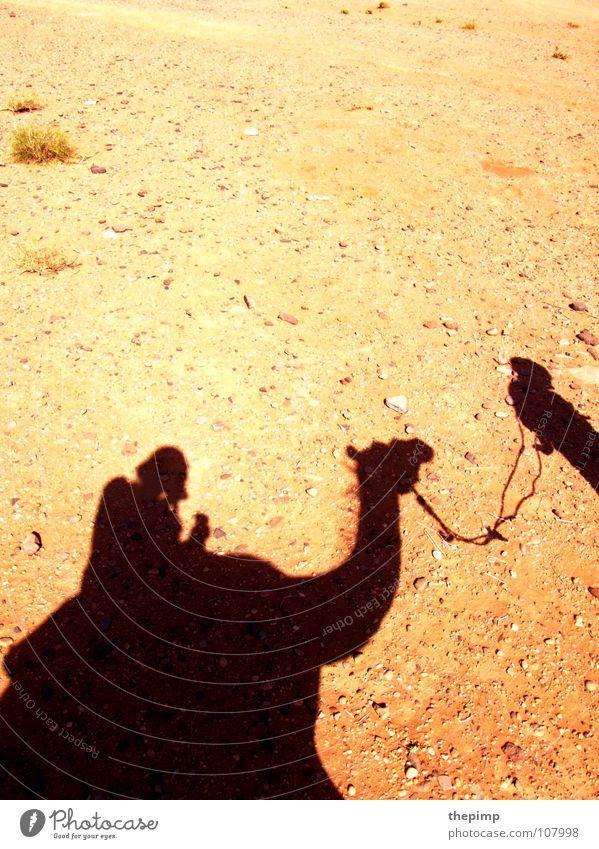 Karawane Kamel Kameltreiber Steinwüste Geröll Sommer heiß Wüste Sonne Schatten