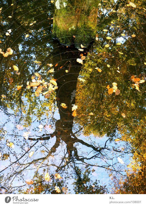 stille Wasser ... Baum Spiegelbild Blatt Sumpf Wald Herbst tief Oberfläche Teich braun grün Baumrinde nass entgegengesetzt unberührt authentisch Stimmung Macht