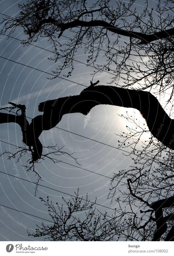 Sweetness Natur Himmel Baum Pflanze Wolken dunkel Linie Stimmung Metall Wetter hoch Energiewirtschaft Elektrizität Kabel bedrohlich Ast