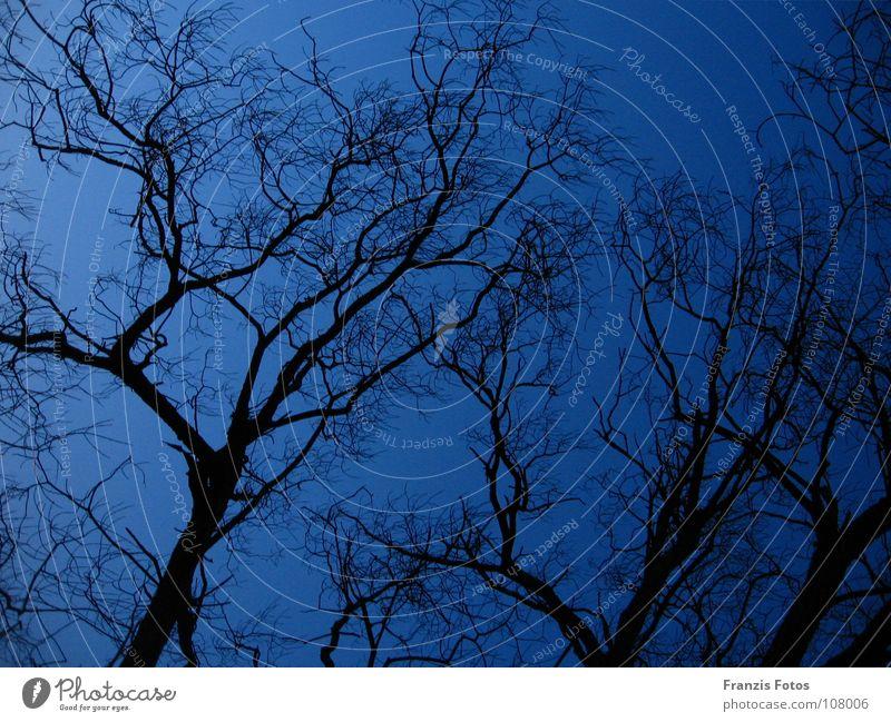 Düster Baum Nacht dunkel unheimlich schwarz blau Zweig Ast