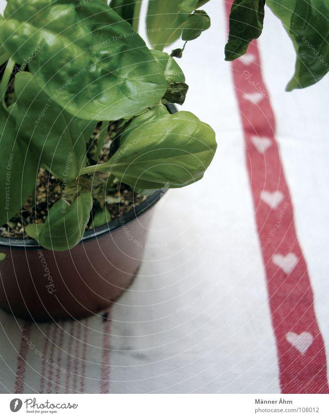 Mit viel Liebe... grün Pflanze Liebe Garten Gesundheit Herz frisch Ernährung Tisch Kochen & Garen & Backen Italien Gemüse Kräuter & Gewürze Erfrischung Stengel lecker