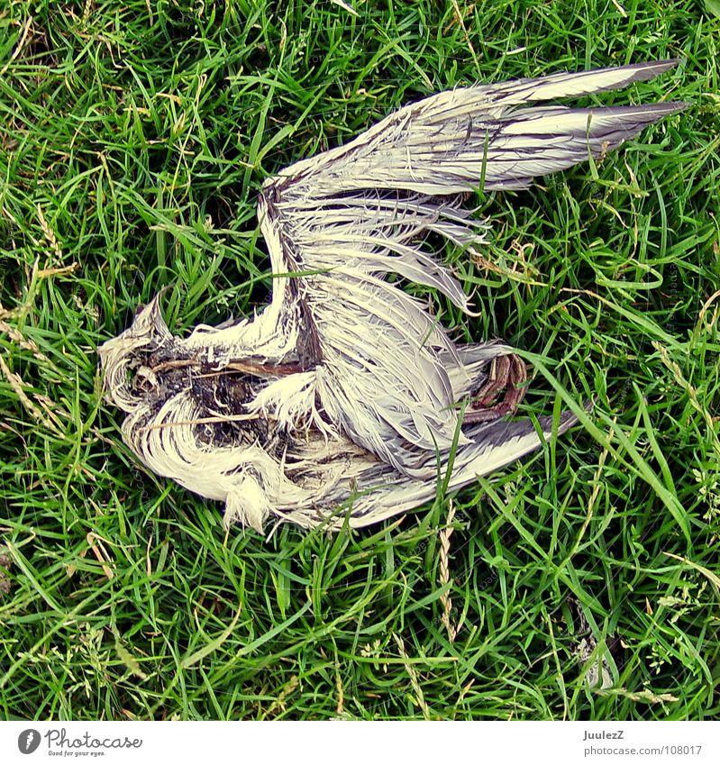 Death Match: You loose grün blau Strand Wiese Tod Gras See Wärme Vogel Küste Wind Trauer Insel Feder verfaulen Flügel