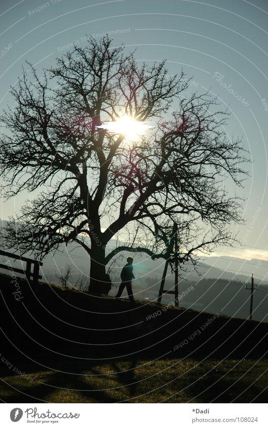Ausblick Mensch Natur Himmel weiß Baum Sonne blau schwarz Ferne gelb dunkel Wiese Berge u. Gebirge Holz grau Wege & Pfade