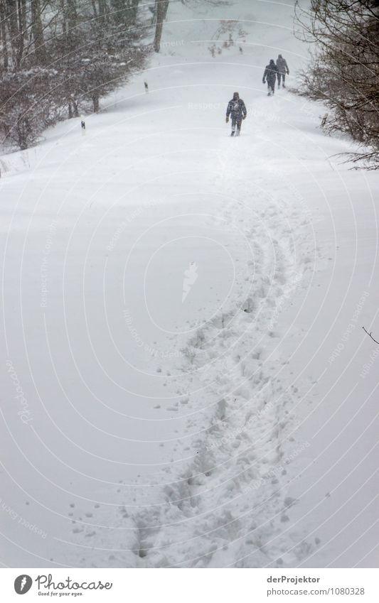 Der Winter ist zurück Mensch Natur Ferien & Urlaub & Reisen Jugendliche Pflanze Landschaft Tier 18-30 Jahre Winter Umwelt Erwachsene Berge u. Gebirge Schnee Küste Schneefall Eis