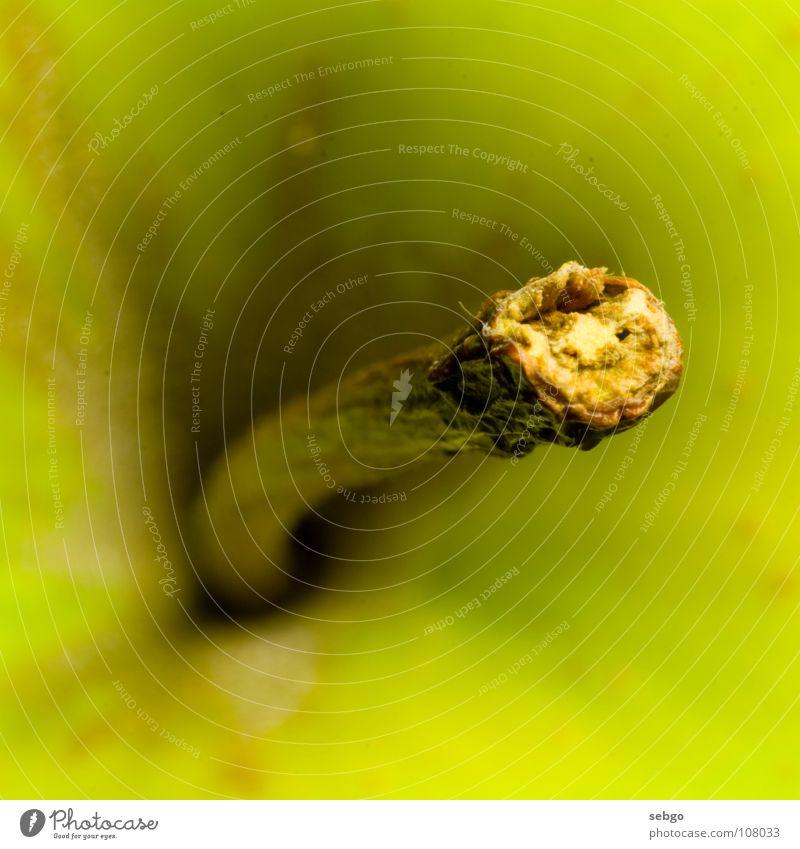 Vitamin-Stängel grün Pflanze Ernährung Lebensmittel Frucht Apfel Stengel Loch