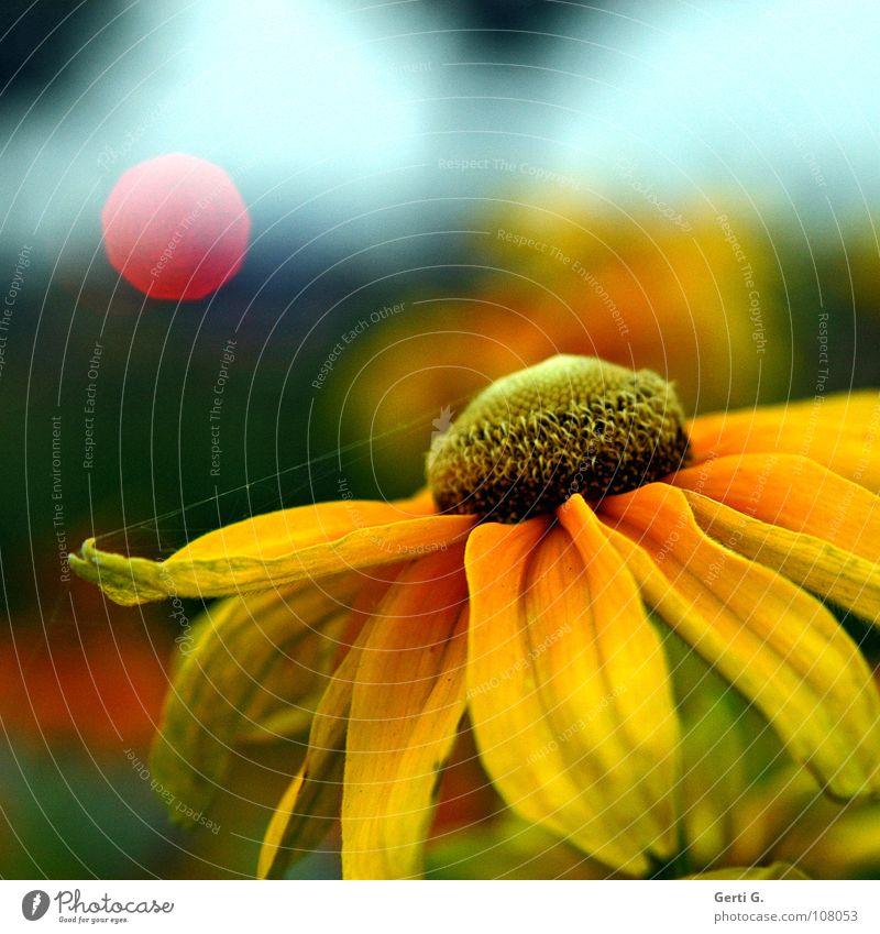 Blümchenknipserbild blau schön Pflanze rot Blume gelb Blüte orange glänzend Punkt Sonnenblume Fleck Ampel Spinne Nähgarn Mischung
