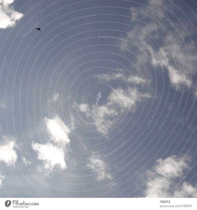 LONELY BIRD Himmel blau Wolken Einsamkeit Freiheit Vogel fliegen frei Frieden violett Bremen Fluggerät
