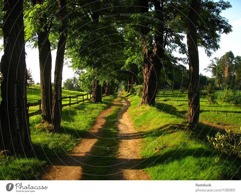 betreten VERBOTEN! Allee Baum Sommer Wiese Golfplatz Garten Park Schatten Wege & Pfade Scharmützelsee Bad Saarow
