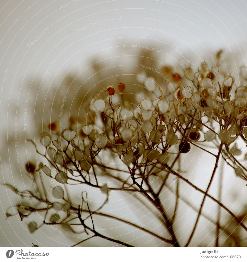 Wiese Natur Pflanze Farbe Herbst Umwelt zart Wildtier trocken Samen getrocknet