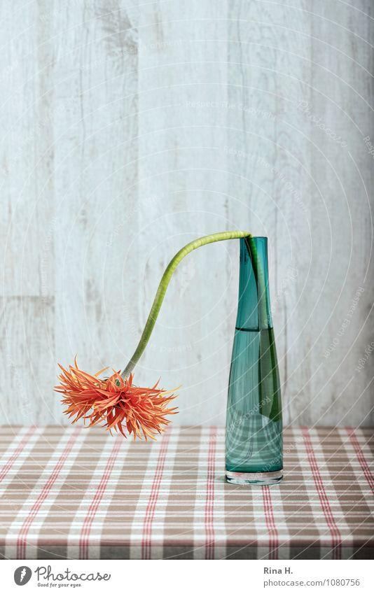 Geknickt Blume Vase Glasvase verblüht grün orange Stillleben Weihnachten Gerbera Tischwäsche kariert Farbfoto Menschenleer Hintergrund neutral