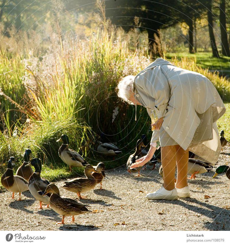 wulli wulli Frau Senior Herbst Glück Zufriedenheit Mensch Ruhestand Teich Ente füttern friedlich Vogel Weiblicher Senior