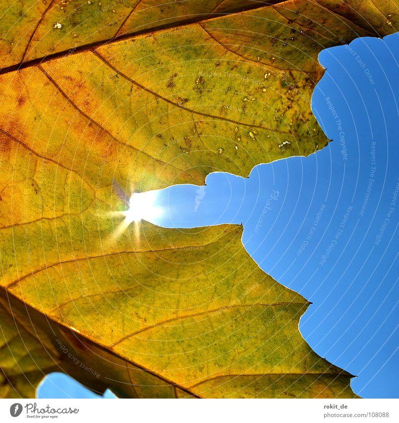 Akai zum 50. Sonne blau Freude Blatt gelb Herbst braun Beleuchtung mögen Gratulation