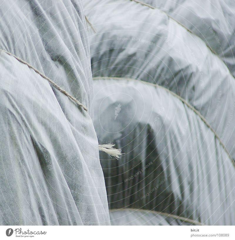 IN HÜLLE UND FÜLLE Winter Pflanze Gärtner Gärtnerei Pflanzenschutz frieren Physik grau türkis weiß hell-blau Landwirtschaft überwintern kalt Eis Schutz