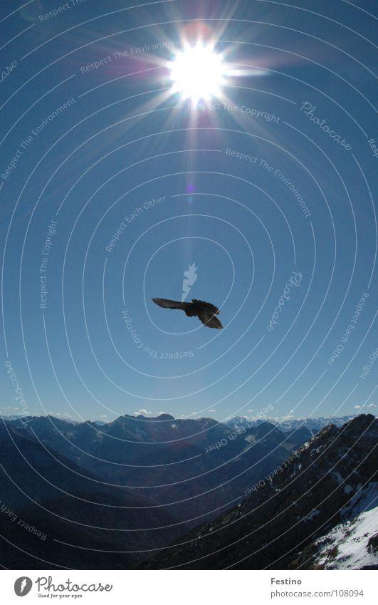 Karwendel Sonne blau Schnee Berge u. Gebirge Vogel Kalkalpen Mittagssonne Mittenwald