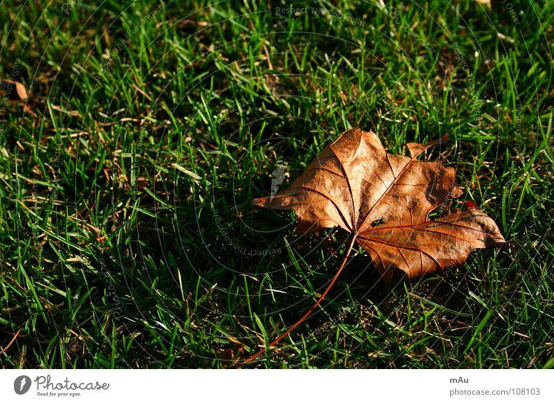 Herbstlaub grün Blatt Gras gold herbstlich