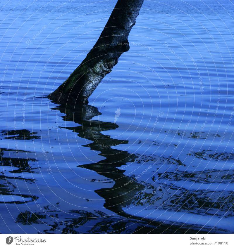 Sintflut Baum See Reflexion & Spiegelung schwarz Birke Wellen Astloch Baumrinde Ferien & Urlaub & Reisen Sommer Wasser blau Baumstamm Küste Überschwemmung
