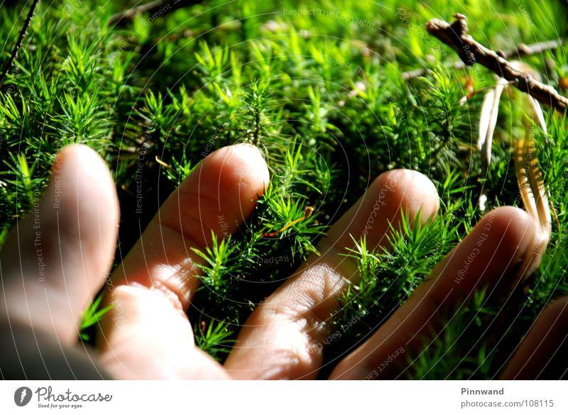 waldspiel Natur grün schön Sommer Baum Hand Winter gelb Gefühle Herbst Gras klein Feste & Feiern Luft frisch dreckig