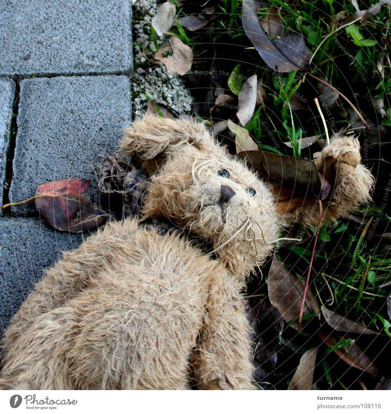 :-( Hase & Kaninchen Fell Armut vergessen liegen verloren vermissen Stofftiere Einsamkeit ausgesetzt Trauer Gleichgültigkeit Teddybär Verzweiflung