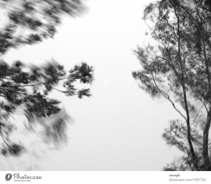 Sturm Wald Unwetter aussetzen Baumstamm Ast Wind Einsamkeit downpour Spuk spukhaft Zweig Baumkrone mystisch Natur Traurigkeit trüb dunkel Angst Orkan Bewegung