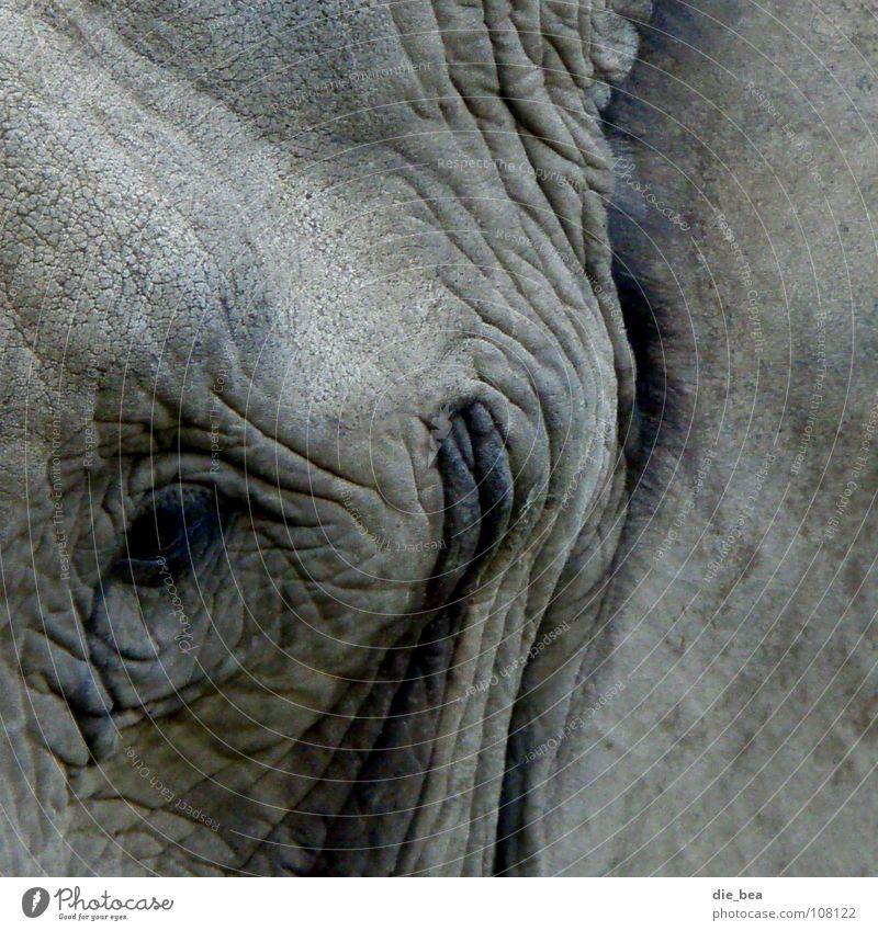 charmantes Lächeln Auge lachen grau dreckig Falte grinsen Säugetier Elefant