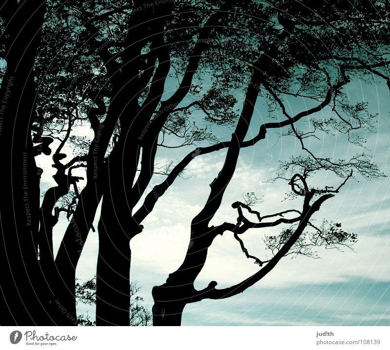 meer wald Baum Herbst Blatt grün Wolken Meer Muster schwarz Baumstamm verzweigt Zauberwald Märchen geheimnisvoll Küste Horizont Strand Klippe Holz Luft kalt