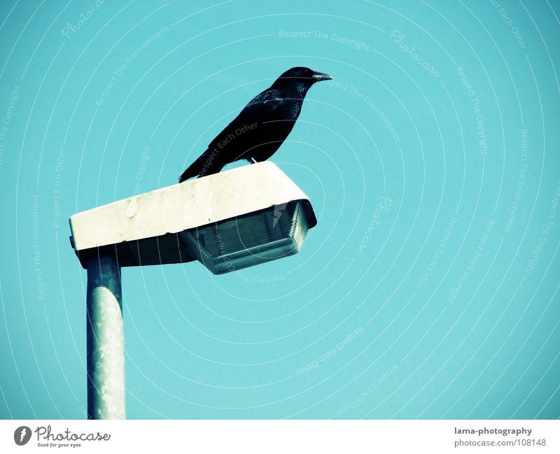 Der Wächter Vogelperspektive überwachen Schutz Rabenvögel Krähe Kolkrabe Dohle Saatkrähe Laterne Straßenbeleuchtung Lampe Himmel Weisheit Märchen Vignettierung