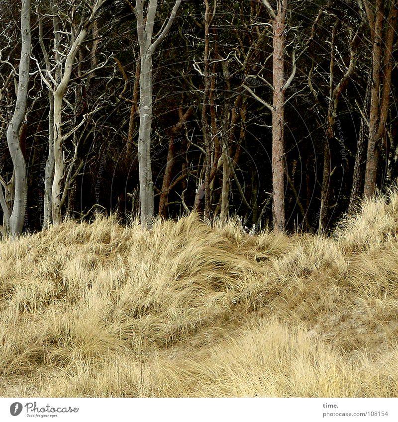 Puschelberge mit Höhlenwächtern, findet Lukas Natur Baum Strand Ferien & Urlaub & Reisen Farbe Gras Küste braun geheimnisvoll Wohnzimmer Ostsee Erwartung