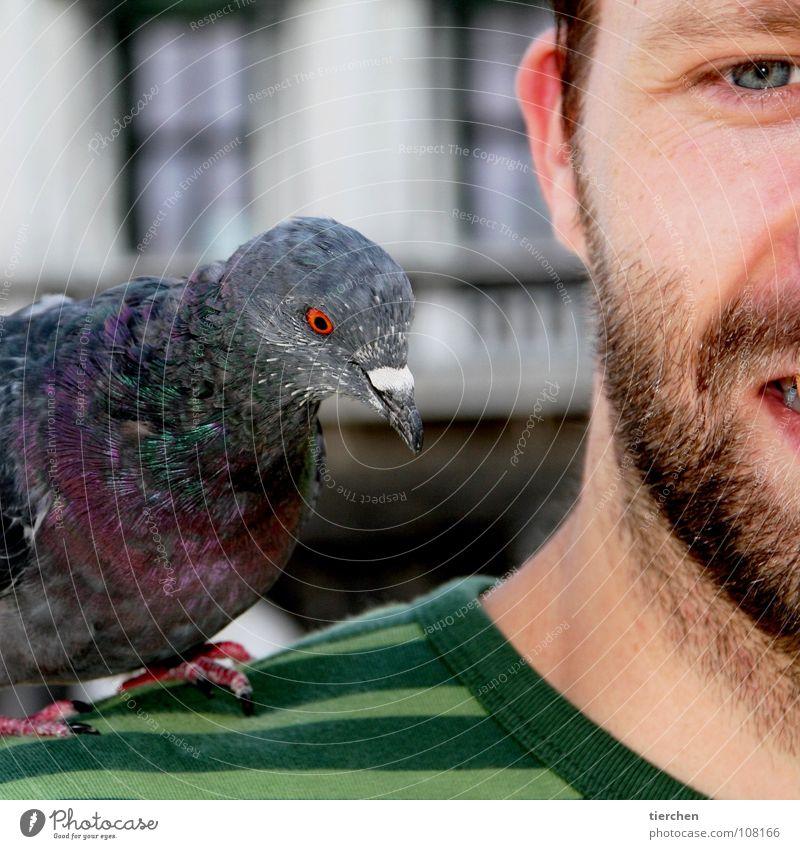 meisenmann Mensch Mann Gesicht Tier Auge Kopf Vogel Feder Ohr Bart Schulter frech Ekel Taube Schnabel Krallen