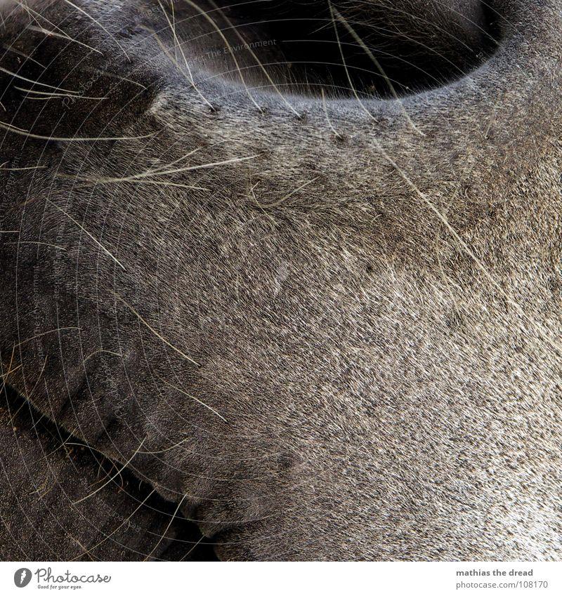Ganz Nahe schwarz Tier grau Haare & Frisuren glänzend Pferd weich Zoo Geruch Säugetier sanft Glätte Öffnung Borsten Nasenloch Nüstern