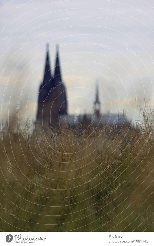 natürlich | ^^ Umwelt Natur Himmel Pflanze Gras Sträucher Stadt Kirche Bauwerk Wahrzeichen wild grün Hoffnung Glaube Lokalpatriotismus Köln Nordrhein-Westfalen