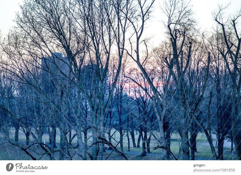 Kölsche Winterimpression Umwelt Landschaft Himmel Klima Schönes Wetter Pflanze Baum Gras Sträucher Park Wiese Küste Flussufer dunkel kalt Stadt grau grün Ast