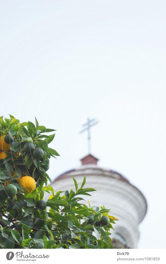 Oranges and lemons ... Natur Ferien & Urlaub & Reisen blau grün weiß Sommer Baum natürlich Religion & Glaube Lebensmittel Park orange Frucht frisch Fröhlichkeit