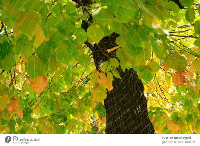 singis bäumlein Natur weiß grün schön Baum Sommer Blatt Wald Farbe gelb Herbst Wiese Spielen oben Frühling Erde