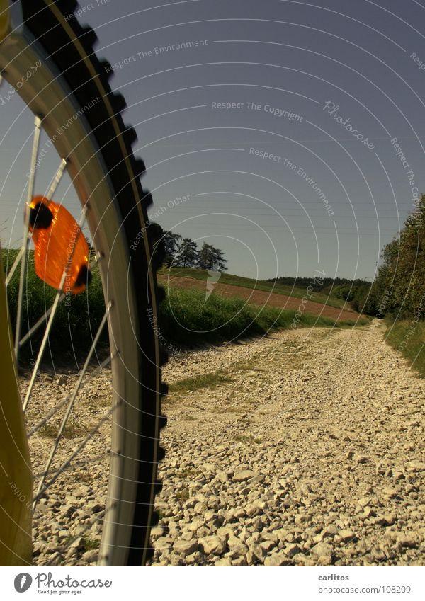 im Wald da ... Herbst Freizeit & Hobby dumm Kies Blauer Himmel Mountainbike Wochenende Fahrrad Unfallgefahr
