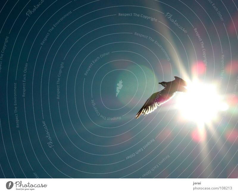 Möve Himmel Sonne Meer Sommer Freiheit Vogel fliegen