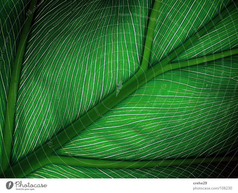 GepflegtesGrün grün Pflanze Blatt Palme Stil Physik schön Makroaufnahme Nahaufnahme Wärme scwarz Schatten Natur geplegt