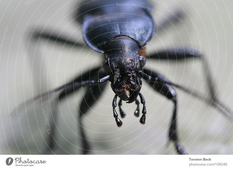 Käfer krabbeln Makroaufnahme Nahaufnahme Außerirdischer Natur Insekt. Nahaufnahme Macroaufnahme schau mir in die Augen kleines ich komme