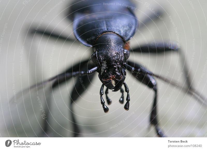 Käfer Natur krabbeln Außerirdischer