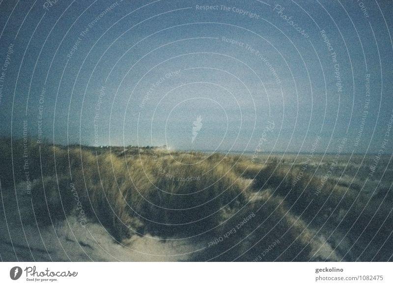 Düne nachts Natur Landschaft Sand Wasser Himmel Nachthimmel Pflanze Gras Küste Strand Nordsee Insel Amrum blau grau grün ruhig Zufriedenheit Einsamkeit Idylle