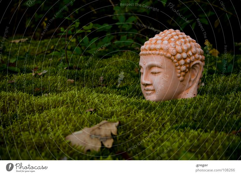 Buddha Mensch grün ruhig Blatt Kopf Kraft Kraft Buddhismus Energiewirtschaft Konzentration Statue Meditation Wachsamkeit Buddha Bewusstsein