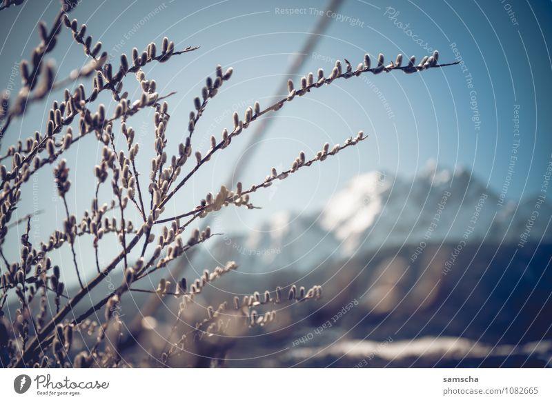 Hallo Frühling I wandern Umwelt Natur Landschaft Wolkenloser Himmel Schönes Wetter Pflanze Baum Sträucher Wildpflanze Feld Wald Alpen Berge u. Gebirge Gipfel
