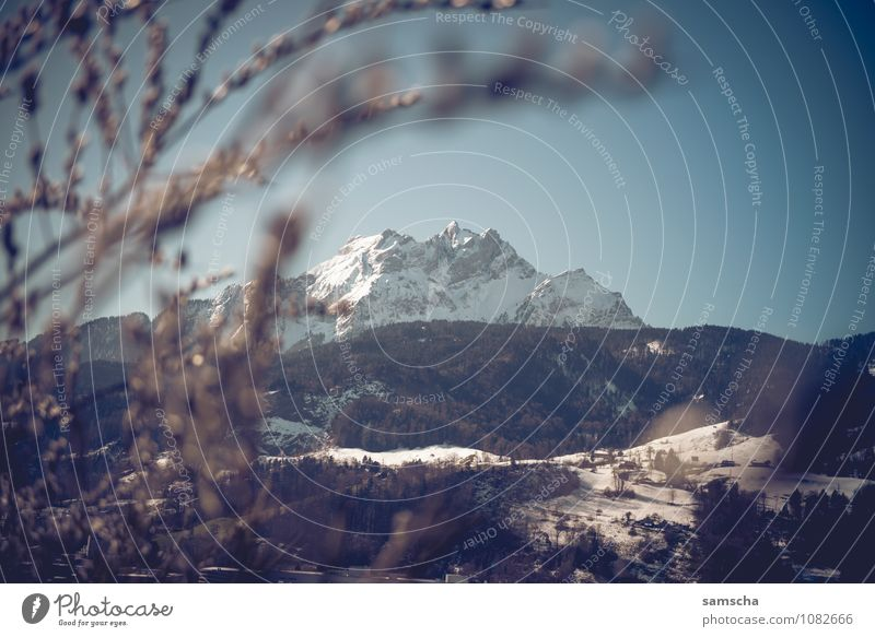 Hallo Frühling II Natur Landschaft Winter Umwelt Berge u. Gebirge Schnee Felsen wandern Ausflug Blühend Abenteuer Gipfel Hügel Alpen Schneebedeckte Gipfel