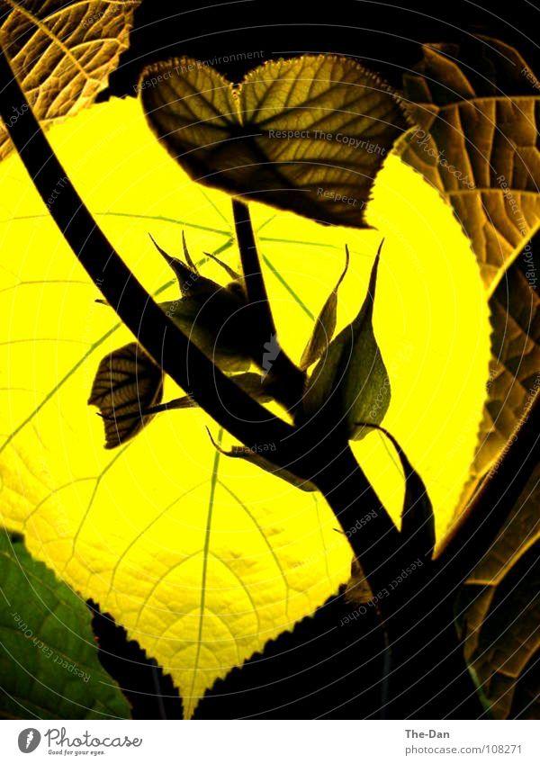 Baum-Hortensie grün Pflanze Blatt Lampe Leben Raum Kunst Blattadern
