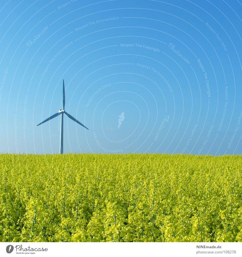 biologicalENERGY Natur Himmel weiß Blume grün Sommer gelb Blüte Bewegung Frühling Feld Wind Umwelt Energiewirtschaft modern Elektrizität