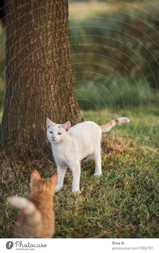 Annäherung Katze Pflanze Tier Wiese Angst authentisch niedlich Haustier skeptisch Misstrauen